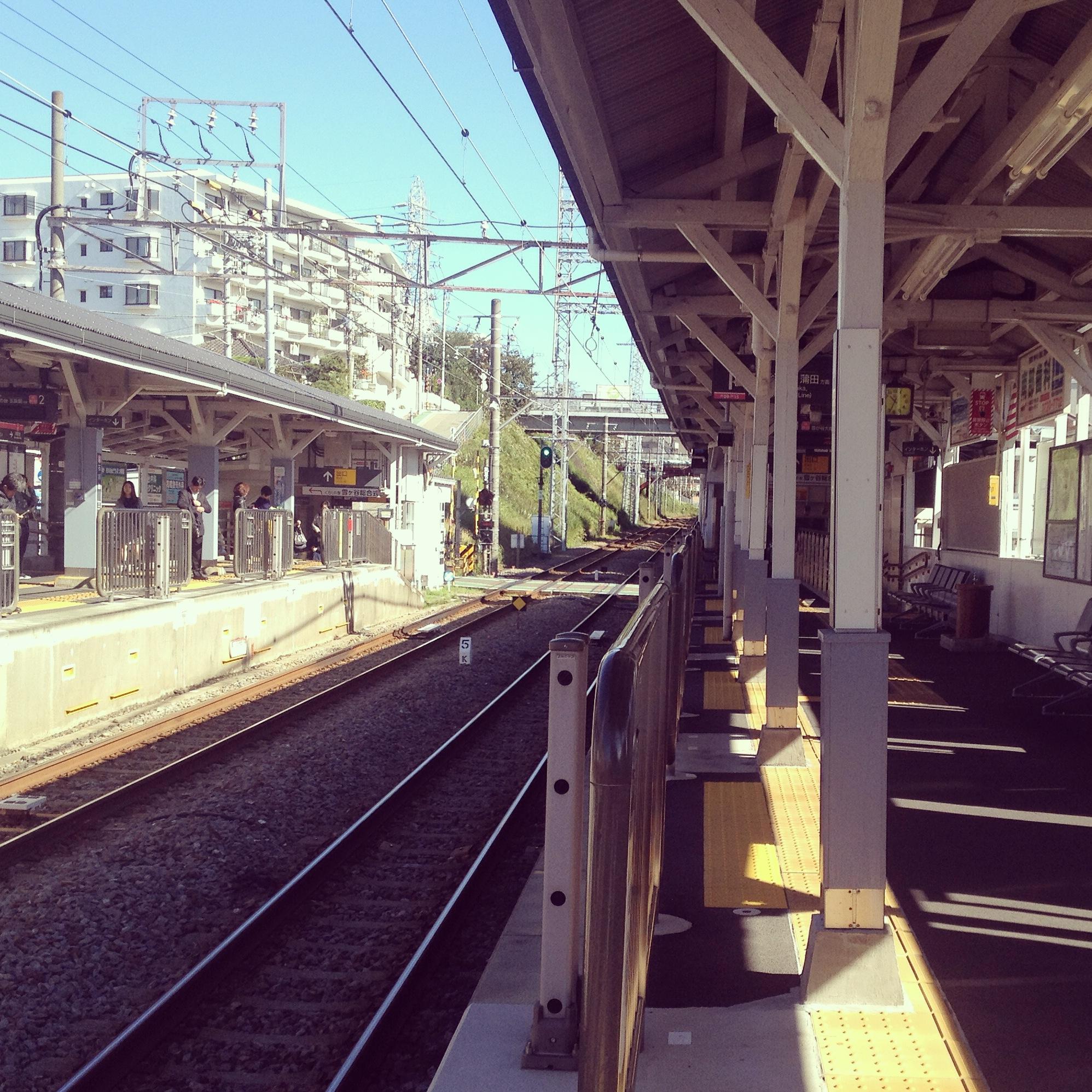 cotta_humikiri